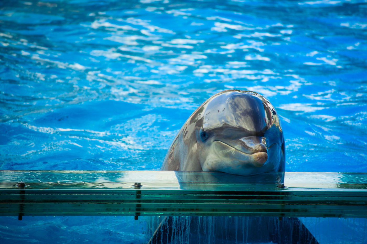 dolphins in captivity Cfaf aims to improve the lives of animals throughout the world by delivering and supporting positive and lasting change for animals.
