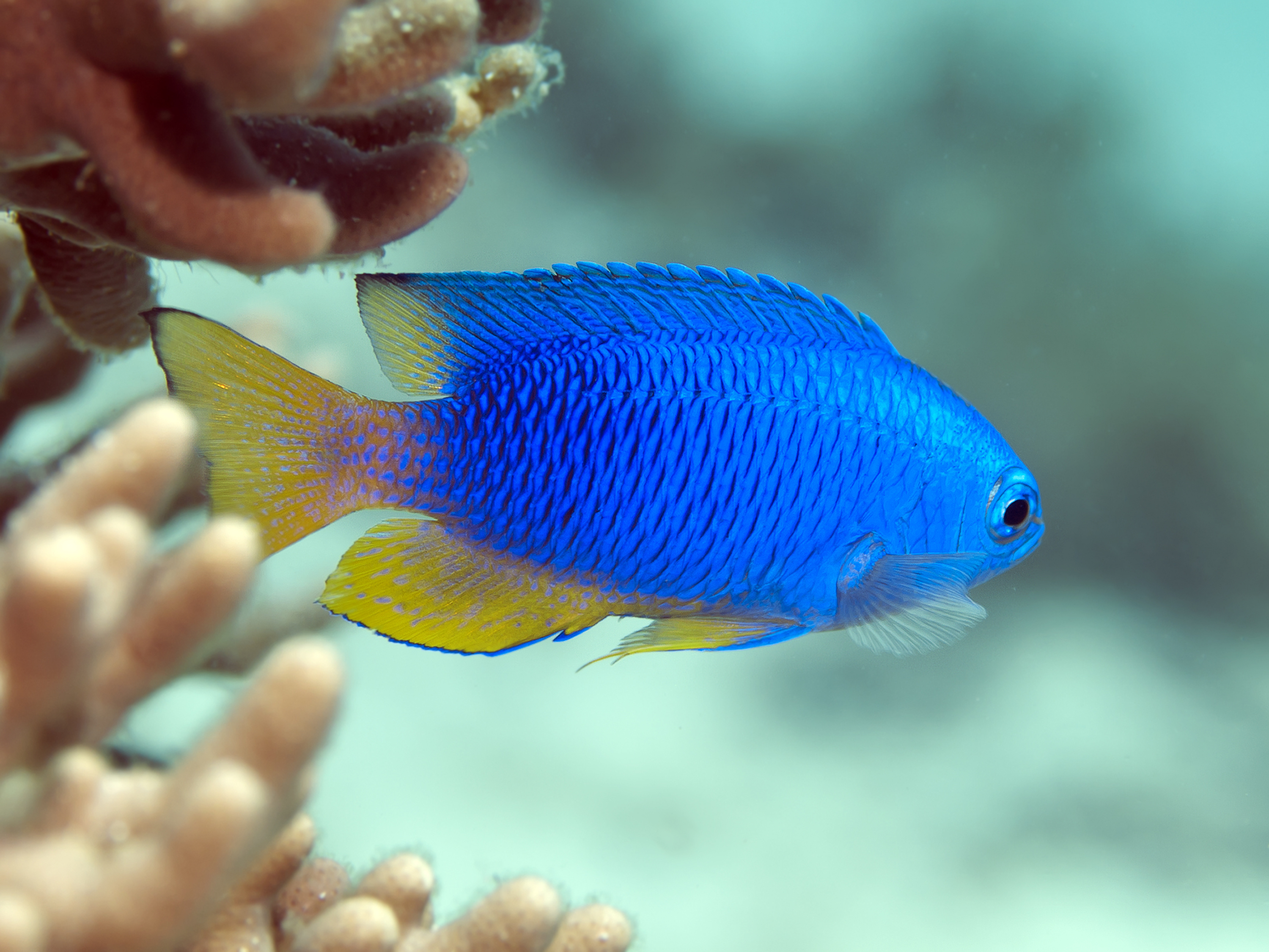 A Beginner's Guide To Tropical Fish Identification • Scuba ...