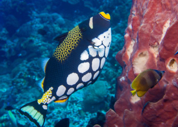 triggerfish_featured