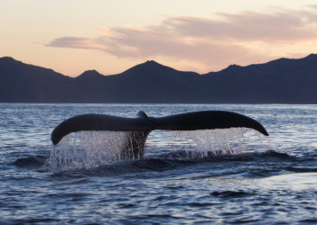 whale_meat_featured